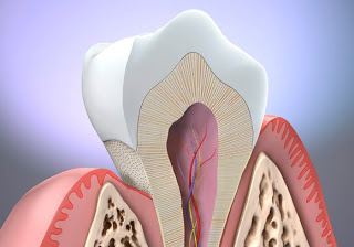 Tooth_Anatomy_Overview